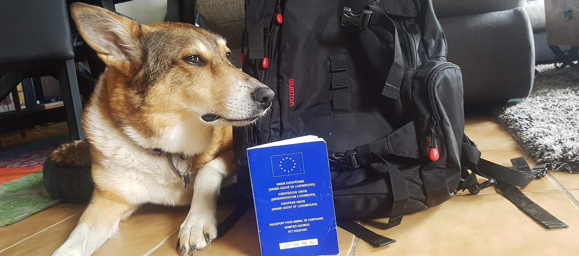 پاسپورت حیوانات در انگلیس و اجازه ی ورود